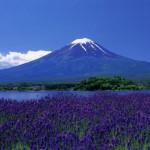 Mt. Fuji  (河口湖町観光課提供)